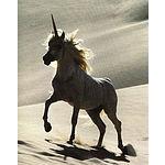 Foto von unicorn, Niederösterreich